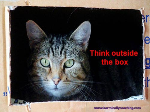 Cat thinking outside box