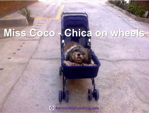 Coco gets her own baby pram