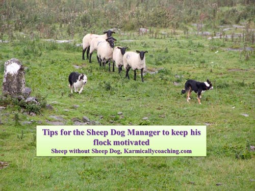 Tips for the sheep dog style corporate manager