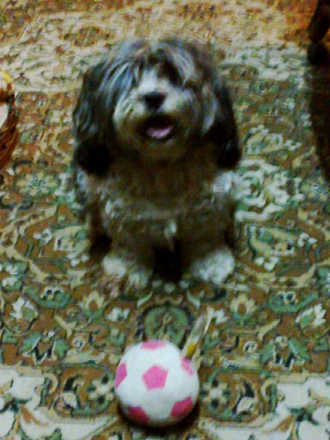 Coco with her soccer ball