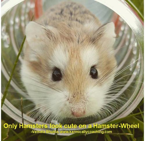 Only hamsters look cute in wheels Karmic Ally Coaching