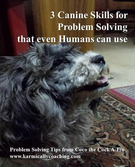 3 canine skills for problem solving