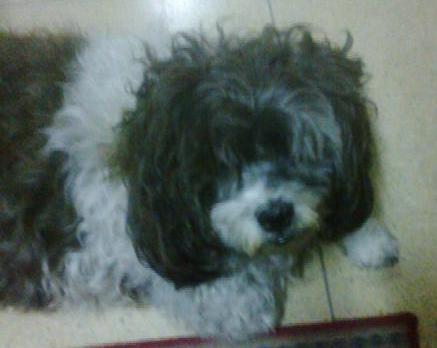 Coco the empathetically perceptive canine